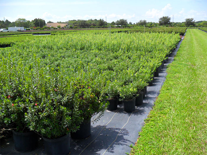 Reliable Peat Company Wholesale